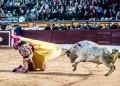 Toros, Olivenza, novillada con picadores, Luis Terrón ,Ganadería: Alejandro Talavante