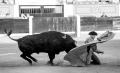 BAdajoz, Novillada con picadores, Juan Carlos Carballo, feria de san juan, ganaderia Fernando Peña