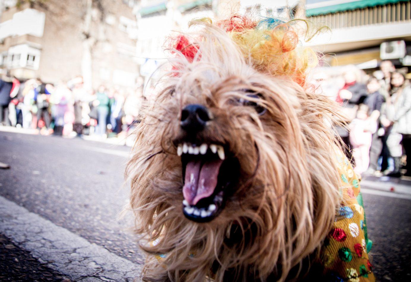Badajoz, Carnavales, entierro de la sardina, desfile de comparsas